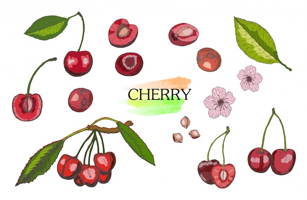 Hand drawn colored cherry set isolated on white background. Premium Vector