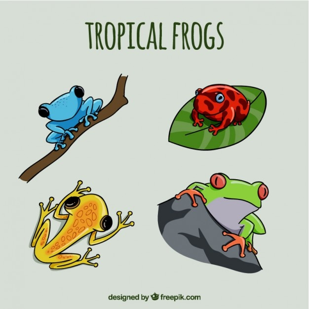 Hand drawn colored frogs Free Vector