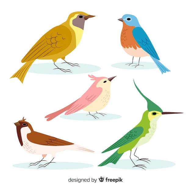 Hand drawn colorful bird collection Free Vector