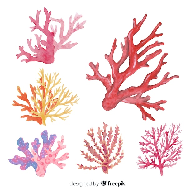 Hand drawn colorful coral collection Free Vector