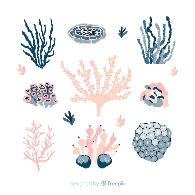 Hand drawn colorful coral collection Vector | Free Download