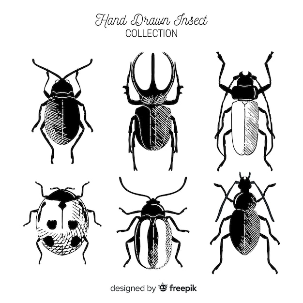 Hand drawn colorless bug collection Free Vector