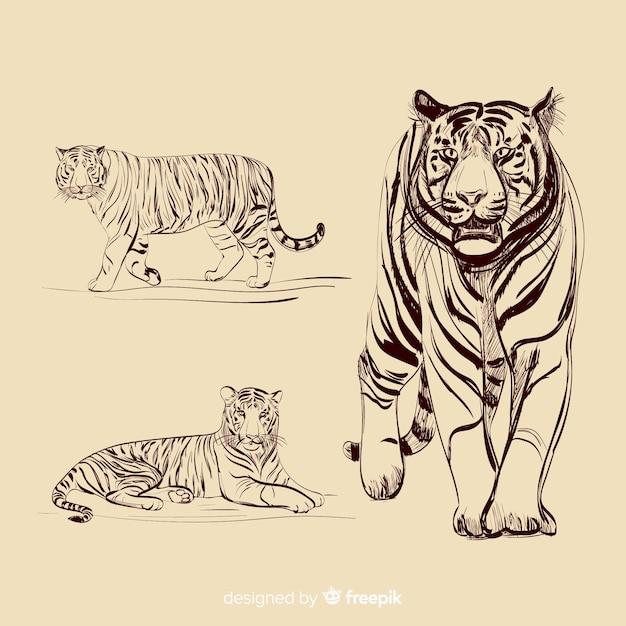 Collezione tigre incolore disegnati a mano Vettore gratuito