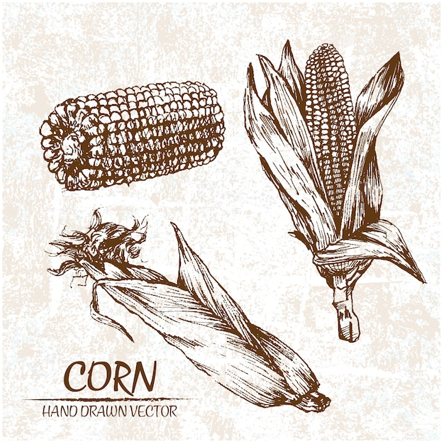 Hand drawn corn design Free Vector