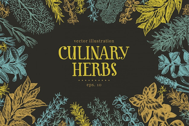 Hand drawn culinary herbs and spices background Premium Vector