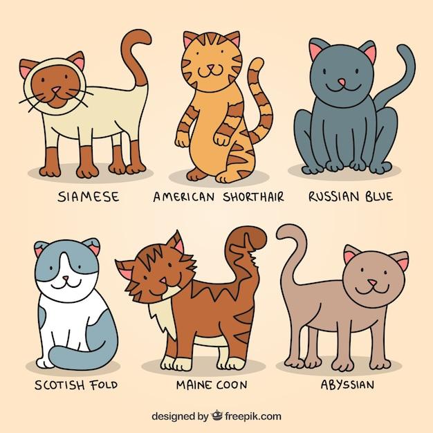 Hand drawn cute cat breeds