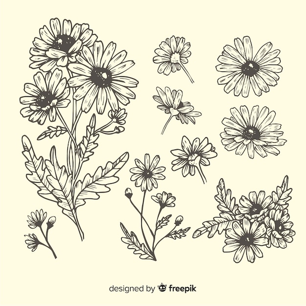 Hand drawn daisies sketches collection Free Vector