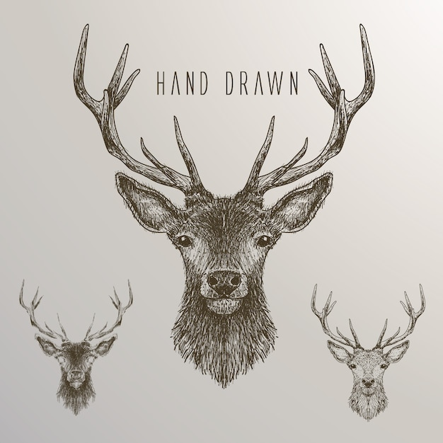 Hand drawn deer collection Free Vector
