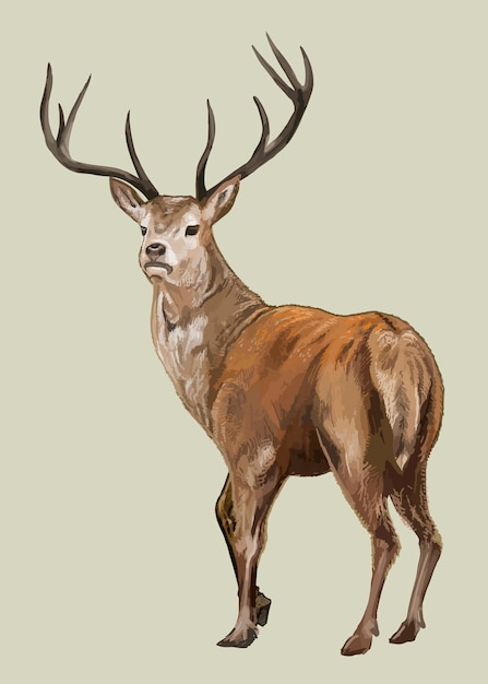 Hand drawn deer Free Vector