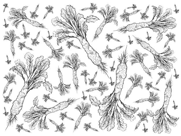 Hand drawn of delicious fresh celtuce background Premium Vector