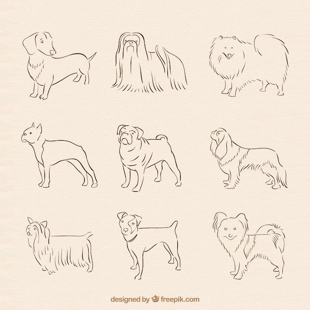 Hand Drawn Dog Breed Collection Vector Free Download