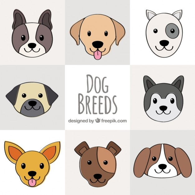 Hand Drawn Dog Breeds Collection Vector Premium Download