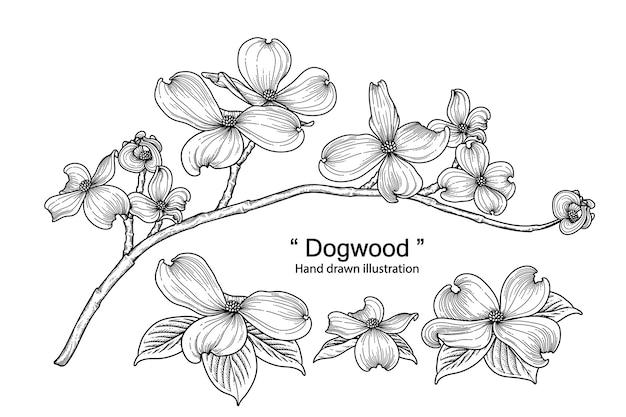 Hand drawn dogwood flower set isolated on white background. Premium Vector
