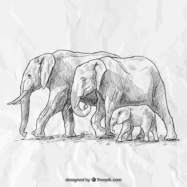 Hand drawn elephant family Free Vector