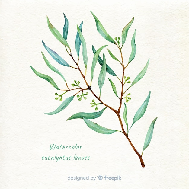 Hand drawn eucalyptus branch background Free Vector