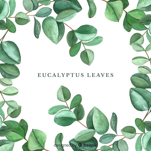 Hand drawn eucalyptus leaves background Free Vector