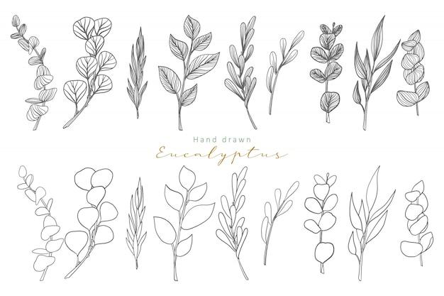 Hand drawn eucalyptus leaves Premium Vector
