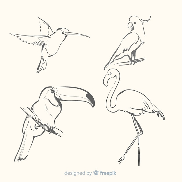 Hand drawn exotic bird collection Free Vector