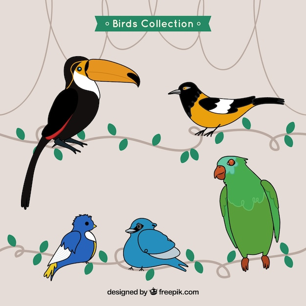 Hand drawn exotic birds collection
