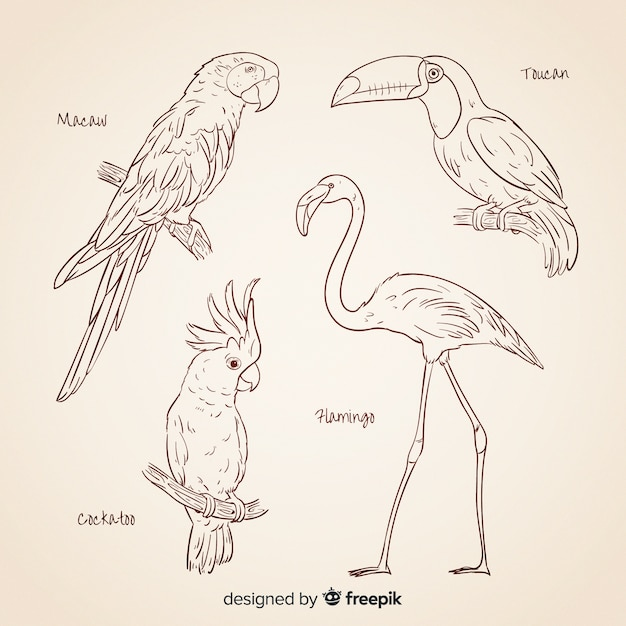 Hand drawn exotic birds collection Free Vector