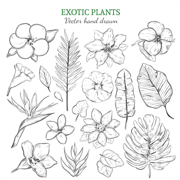 Hand drawn exotic plants set Free Vector