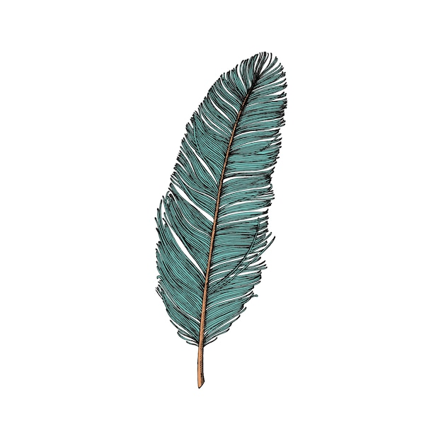 Hand drawn feather isolated on white background Free Vector