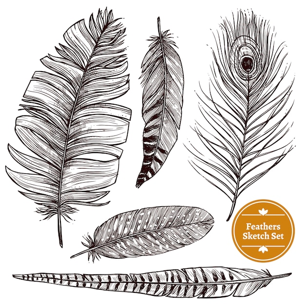 Hand drawn feathers set Free Vector