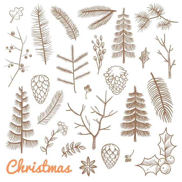 Hand drawn fir and pine branches, fir-cones. christmas and winter holidays doodle vector design elements. branch of pine and evergreen plant illustration Premium Vector