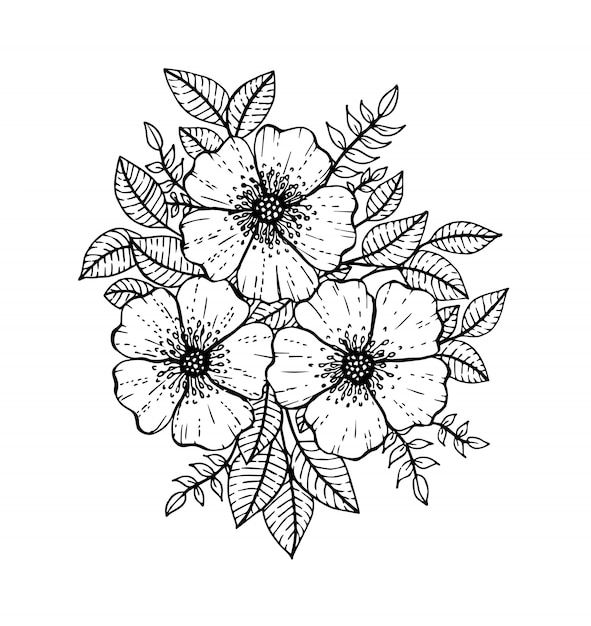 Premium Vector Hand Drawn Floral Doodle Coloring Pages For Book Line Art