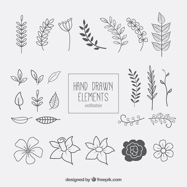 hand drawn floral elements collection vector