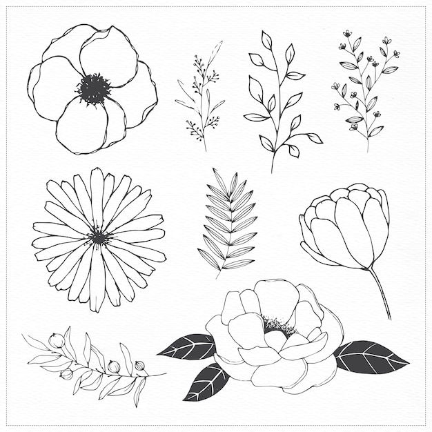 Hand drawn flowers and leaves free vector