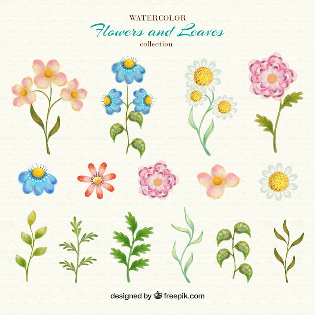 Hand drawn flowers and leaves Vector | Free Download