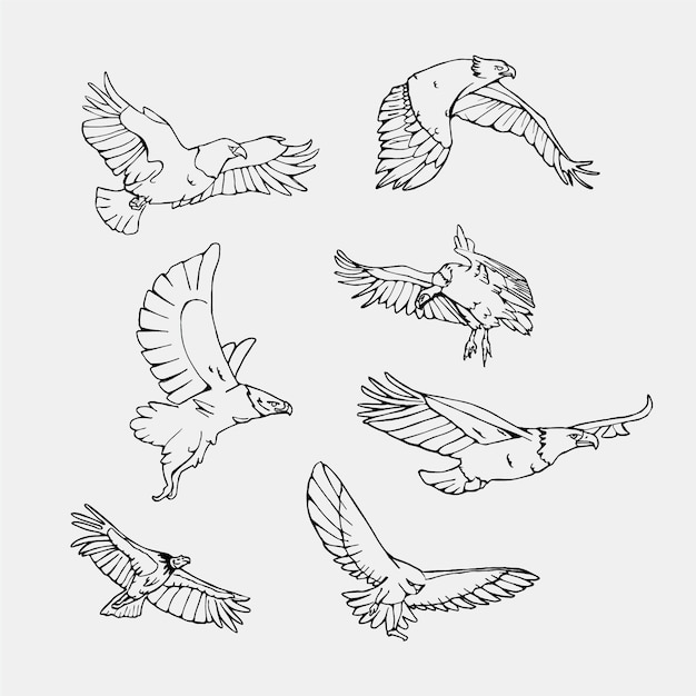 hand drawn flying birds collection vector