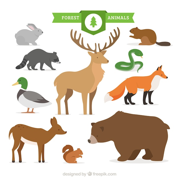 Hand drawn forest animal collection  Free Vector