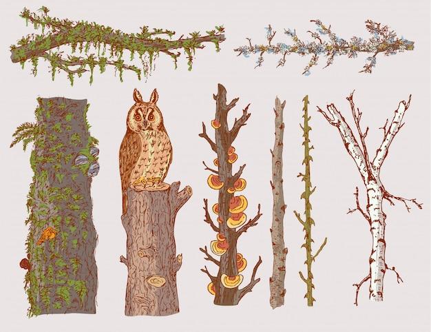 Set di alberi forestali disegnati a mano Vettore gratuito