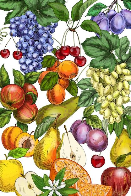 手描き果物イラスト Premiumベクター