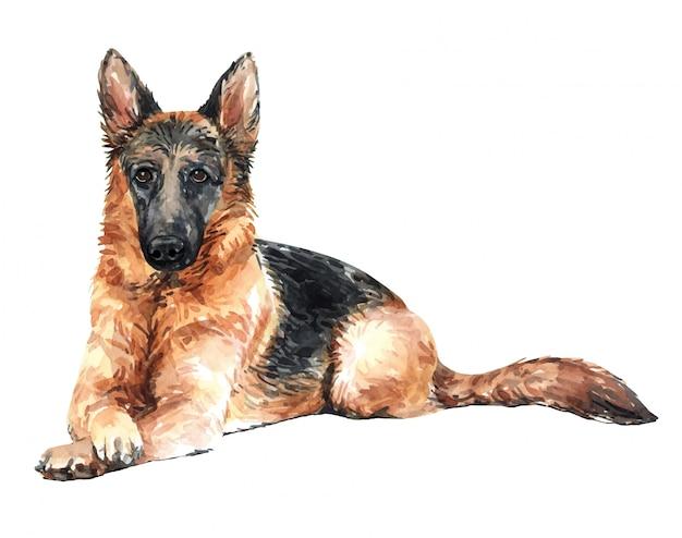 Hand drawn german shepherd watercolor dog. Premium Vector