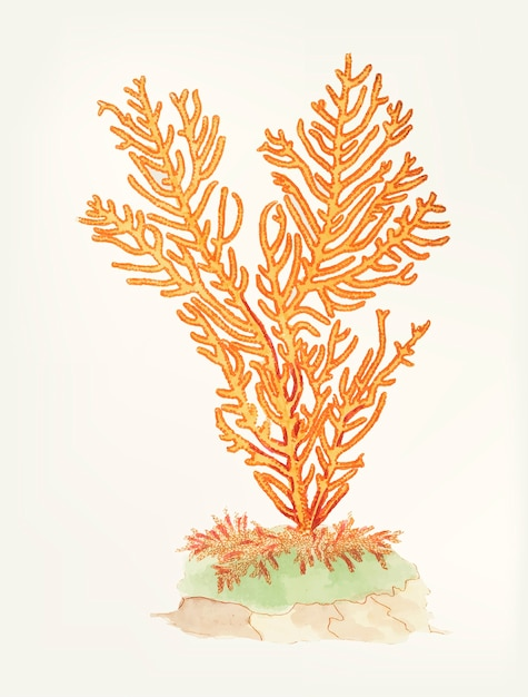 Hand drawn of gorgonian fan coral Free Vector