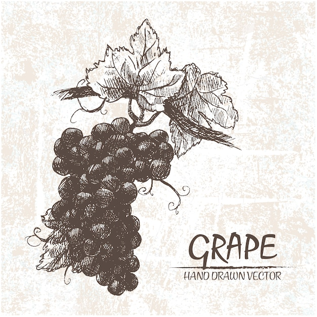 Hand Drawn Grapes Design Free Vector