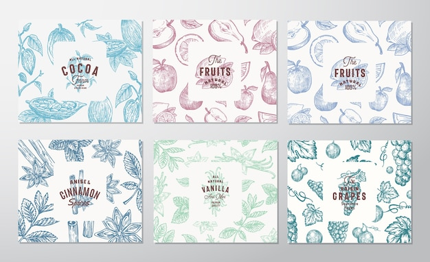 Hand drawn grapes, fruits, cocoa beans, mint, nuts and spices cards set. Free Vector