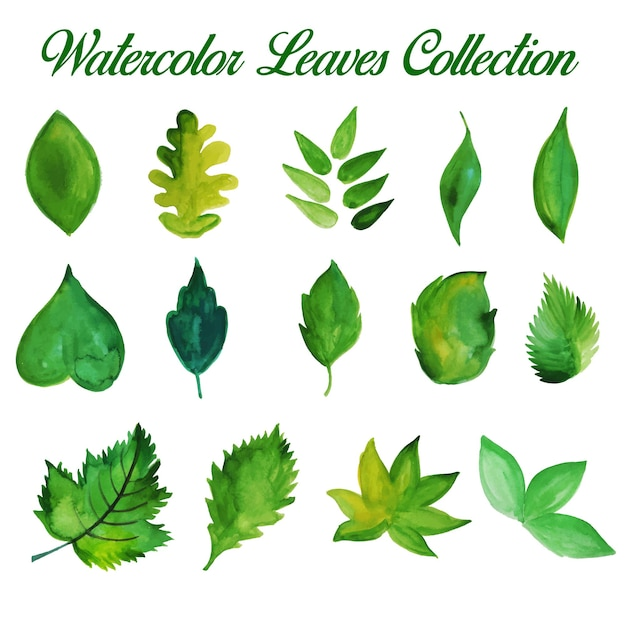 Hand Drawn Green Watercolor Leaves\ Collection