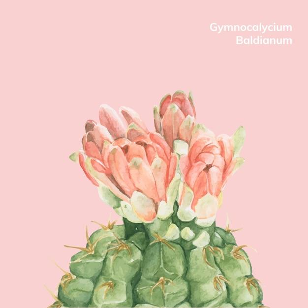 Hand drawn gymnocalycium baldianum cactus Free Vector