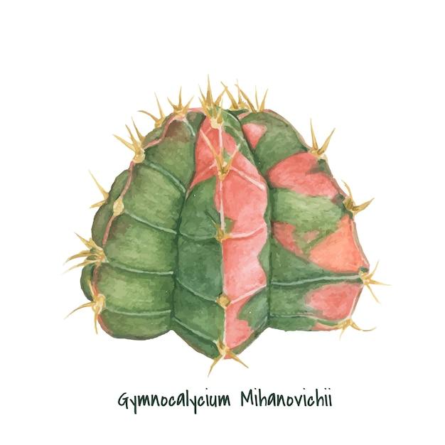 Hand drawn gymnocalycium mihanovichii moon cactus Free Vector
