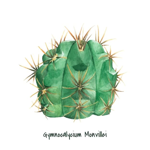 Hand drawn gymnocalycium monvillei cactus Free Vector