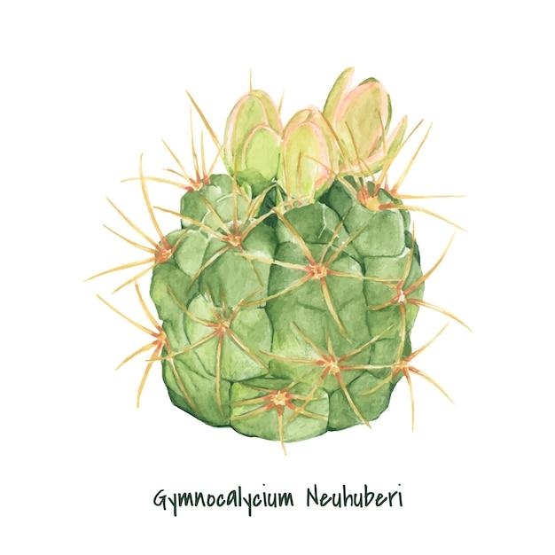 Hand drawn gymnocalycium neuhuberi cactus Free Vector