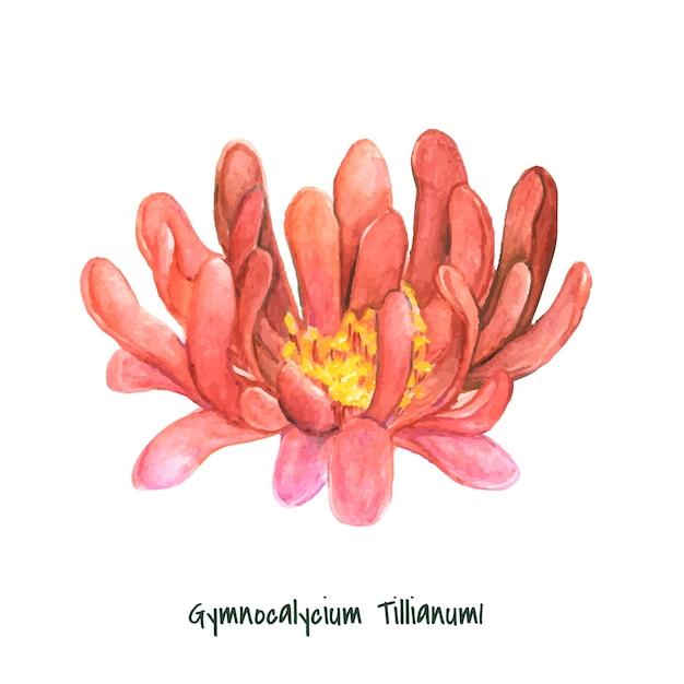 Hand drawn gymnocalycium tillianum cactus Free Vector