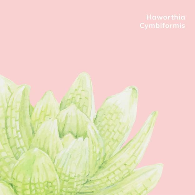 Hand drawn haworthia cymbiformis succulent Free Vector