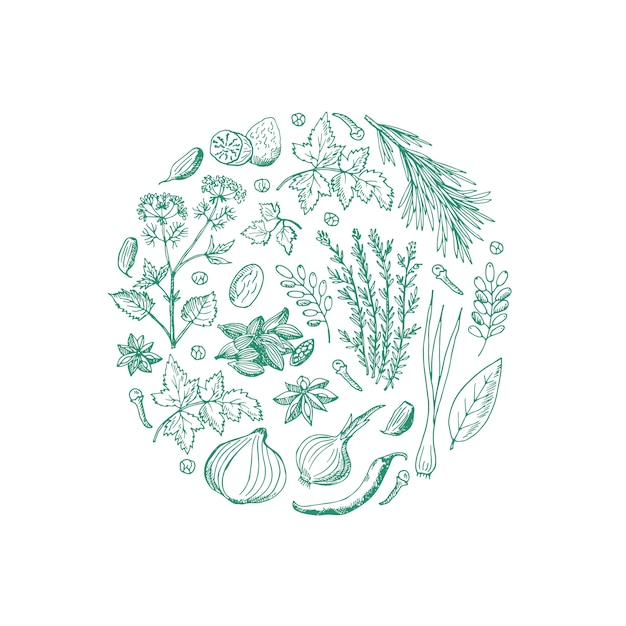 Hand drawn herbs and spices in circle shape Premium Vector