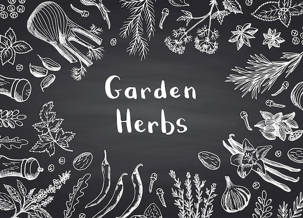 Hand drawn herbs and spices frame background Premium Vector