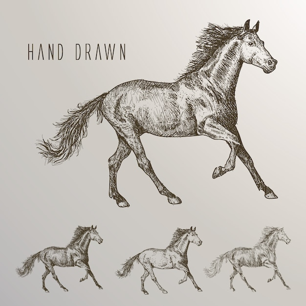 Hand drawn horses collection